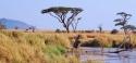 Дума сафари в саваната на ТАНЗАНИЯ - индивидуални пакетни предложения за 2021 г. с възможност за почивка на остров ЗАНЗИБАР